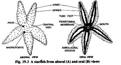 echinoderms46290.weebly.com