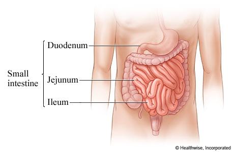 http://www.webmd.com/digestive-disorders/small-intestine