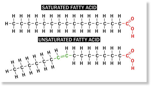 https://wemustknow.wordpress.com/2011/07/03/everything-about-fat/