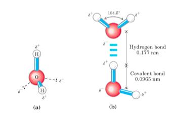 Lehninger Principles of Biochemistry, 5E. Lehninger, et alia.