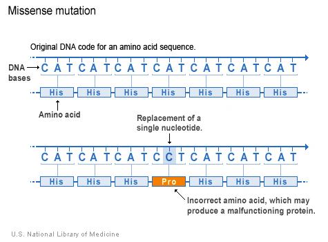 http://en.wikipedia.org/wiki/Missense_mutation#/media/File:Missense_Mutation_Examplejpg