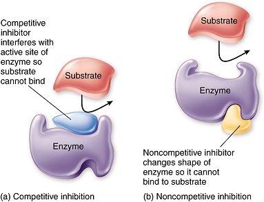 https://biochemanics.wordpress.com/tag/uncompetitive-inhibition/