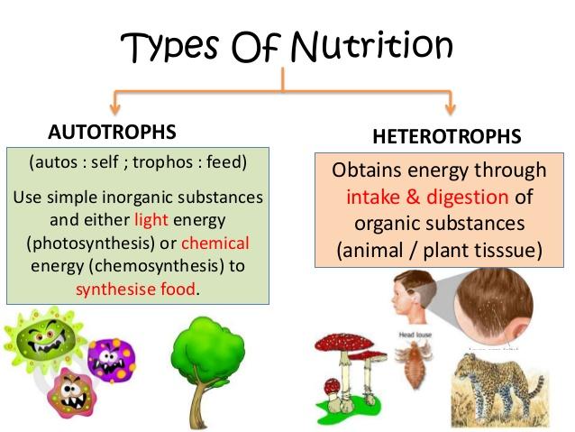 What Kingdoms Include Organisms That Are Autotrophic Or Heterotrophic Socratic