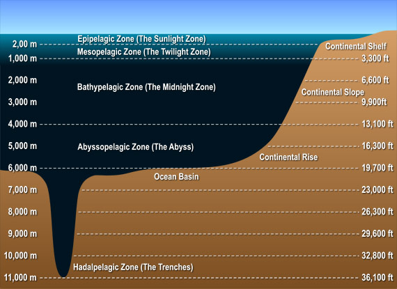 http://www.seasky.org/deep-sea/ocean-layers.html