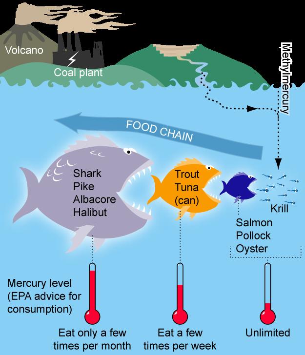 https://en.wikipedia.org/wiki/Mercury_in_fish