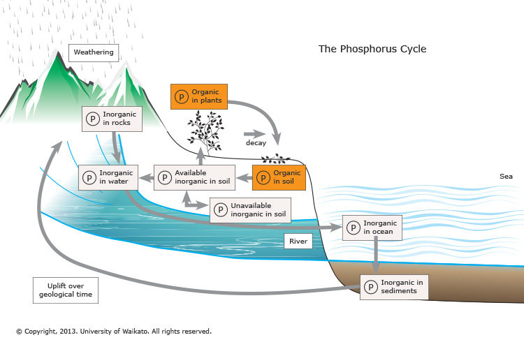 http://sciencelearn.org.nz/Contexts/Soil-Farming-and-Science/Science-Ideas-and-Concepts/The-phosphorus-cycle