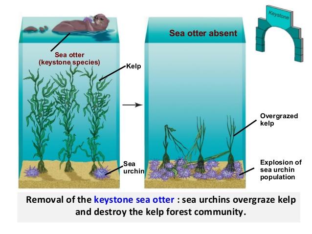 http://www.slideshare.net/mazz4/ecology-c-comm-succes-47838307