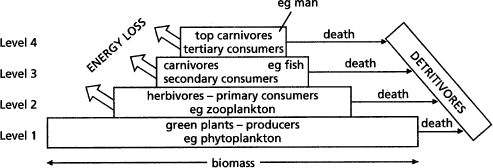 http://programs.clarendoncollege.edu/programs/NatSci/Biology/Zoology/zoo%20online%20outlines/ANIMAL%20ECOLOGY%20online.htm