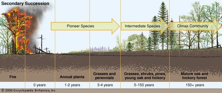 http://www.britannica.com/EBchecked/topic/178264/ecological-succession