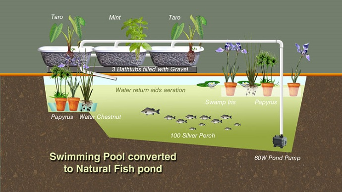 http://permaculturenews.org/2016/01/19/converting-a-swimming-pool-to-grow-fish/