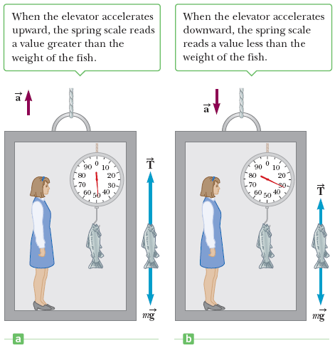 Your Mass Is 55 Kg You Stand On A Bathroom Scale In An Elevator On Earth What Does The Scale Read When The Elevator Moves Up At A Constant Speed Socratic