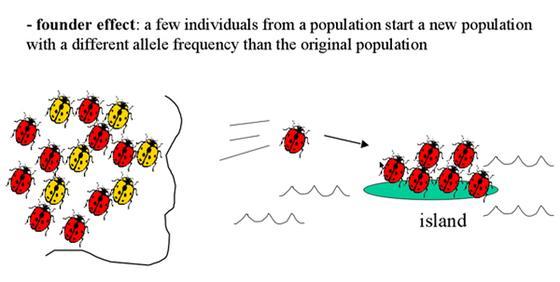 AP Biology Wiki