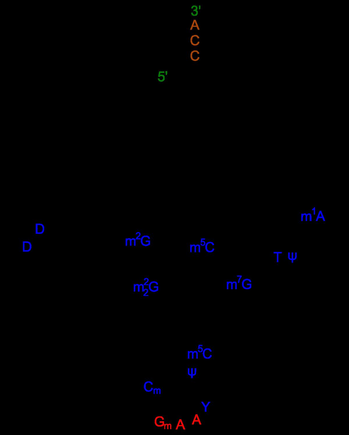 https://en.wikipedia.org/wiki/Transfer_RNA
