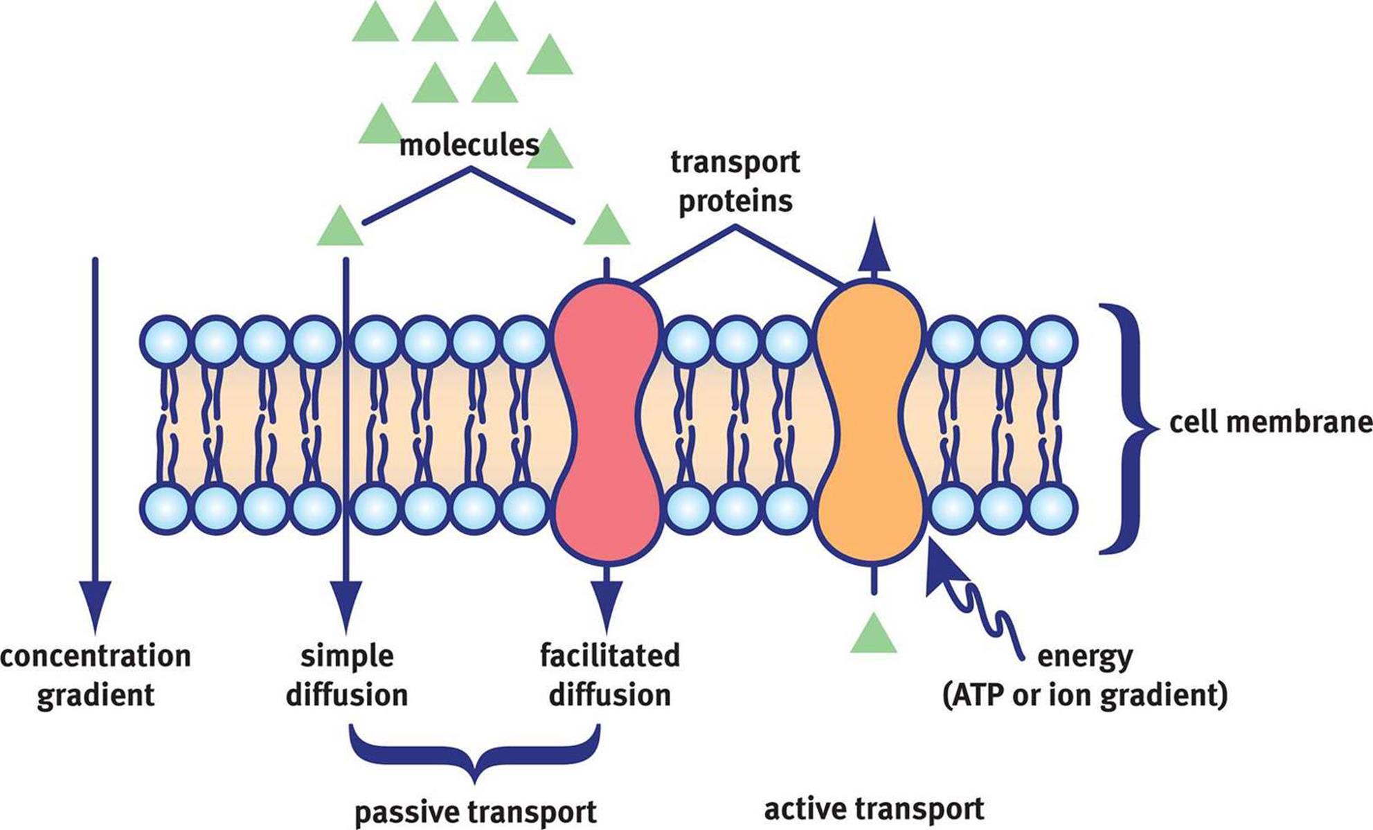 http://schoolbag.info/chemistry/mcat_biochemistry/49.html