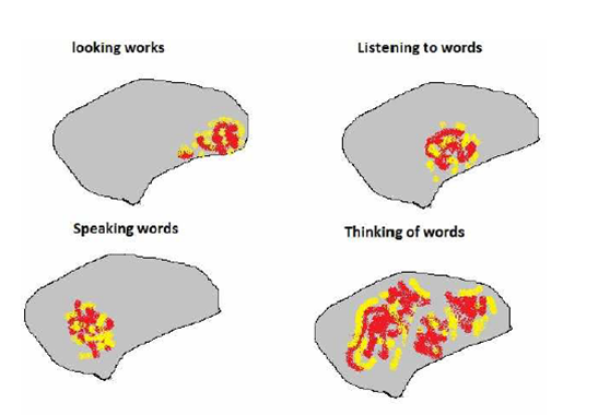 The brain and areas activated