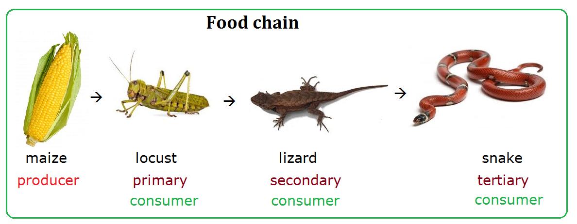 http://igbiologyy.blogspot.com/2014/03/107-food-chains-food-web.html