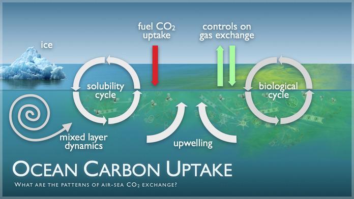 http://www.pmel.noaa.gov/co2/file/Ocean+Carbon+Uptake+Image