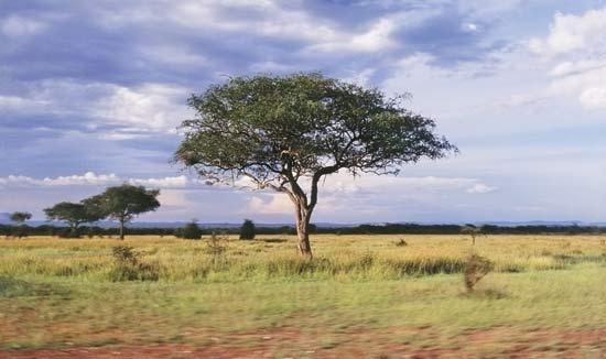 https://www.britannica.com/science/savanna/images-videos