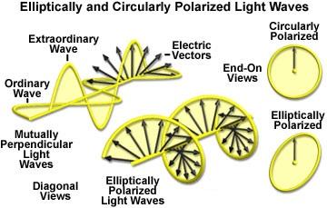 Molecular Expressions