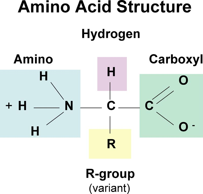 https://iweb.langara.bc.ca/biology/mario/Biol2315notes/biol2315chap3.html