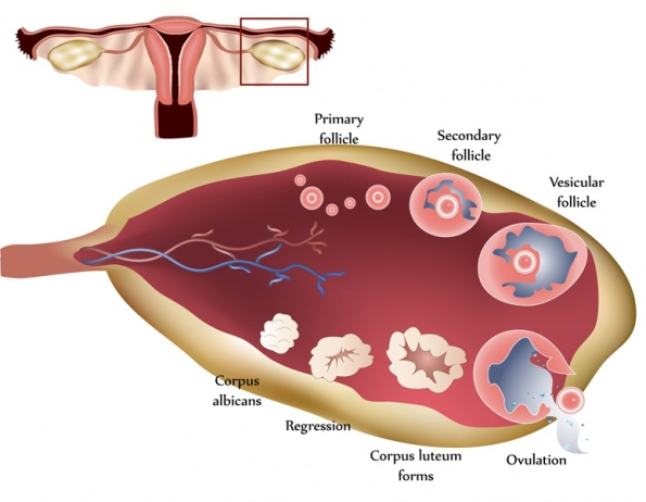 http://ndnr.com/womens-health/supporting-the-luteal-phase-with-integrative-medicine/