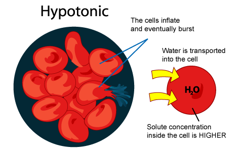 http://spmbiology403.blogspot.com/2008/08/types-of-solution-hypotonic.html