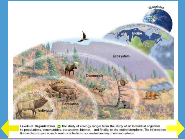 http://www.slideshare.net/Trischa93/biosphere-to-ecosystems-32161708