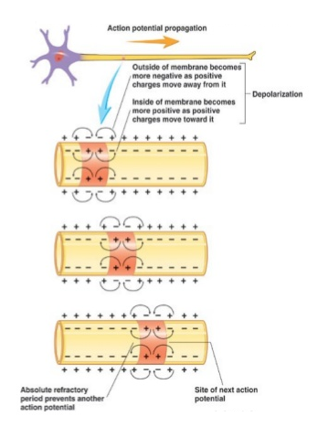 http://www.slideshare.net/desiredunduri/clipboards/neurophy