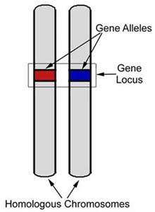 http://creationwiki.org/Locus