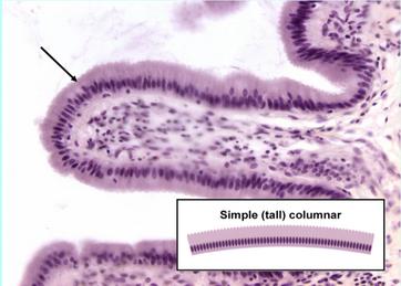 With microvilli