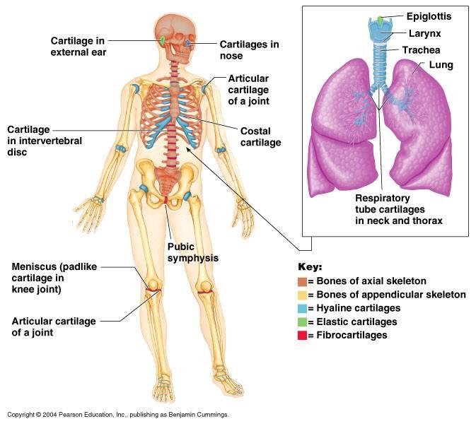 jessicamilleranatomy.wordpress.com