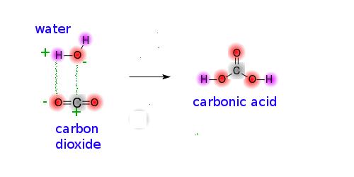 http://s1109.photobucket.com/user/csoeder/media/acidification/carbonates.png.html
