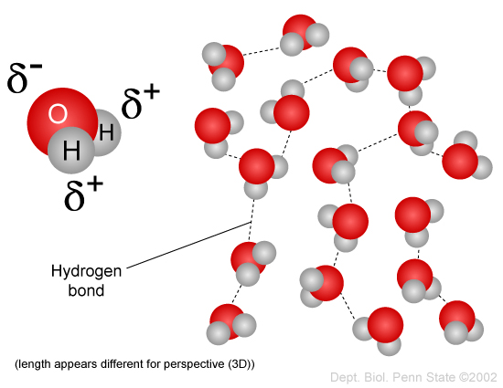 http://imgbuddy.com/water-molecule-hydrogen-bond.asp