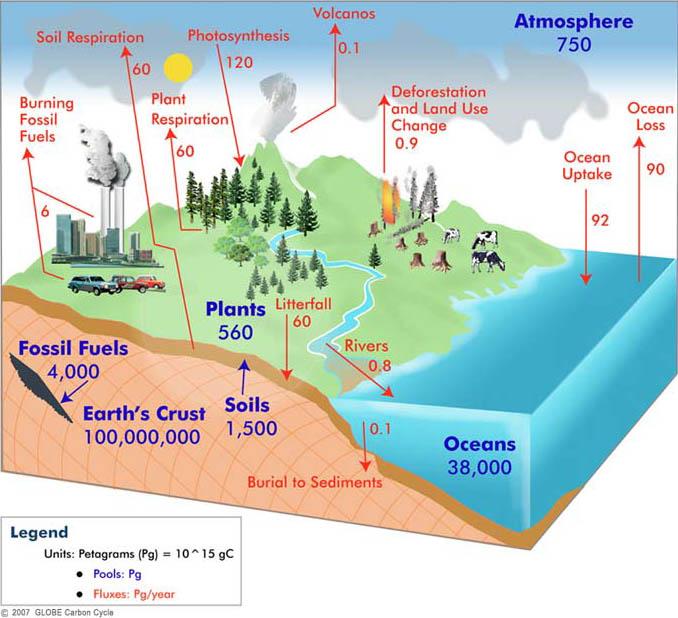 http://globecarboncycle.unh.edu/diagram.shtml