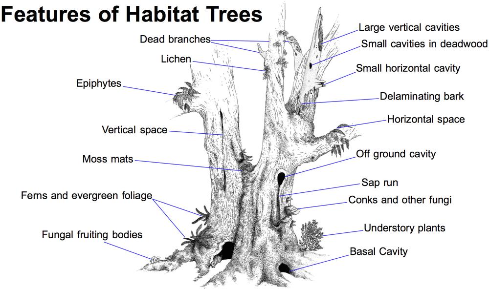 http://static1.squarespace.com/static/54ebc2f7e4b0a4a2247cd7ab/t/556f98e3e4b063cd79bebaec/1433376999983/Habitat+tree+3jpg