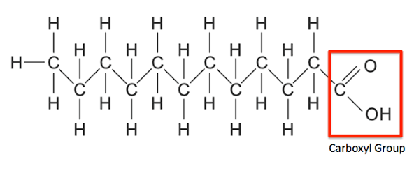 How Does Dehydration Synthesis Relate To Lipids