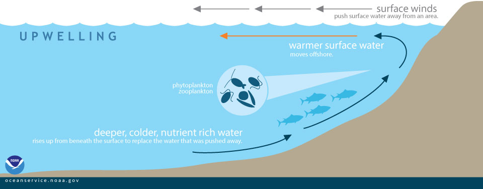 https://oceanservice.noaa.gov/facts/upwelling.html