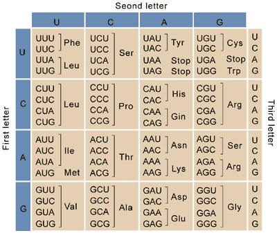 https://en.wikibooks.org/wiki/An_Introduction_to_Molecular_Biology/Genetic_Code