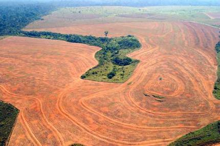 http://www.all-creatures.org/hope/gw/02_Amazon_deforestation.htm
