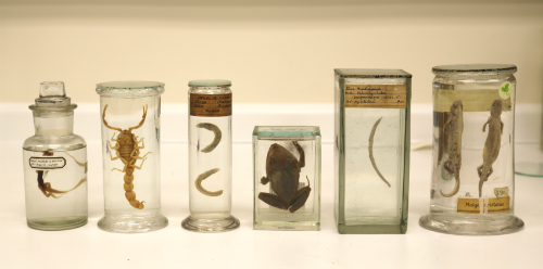 http://blogs.ucl.ac.uk/museums/2016/08/01/project-pickle-conserving-our-specimens-preserved-in-fluid/