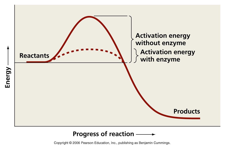 http://academic.pgcc.edu/~kroberts/Lecture/Chapter%205/enzymes.html
