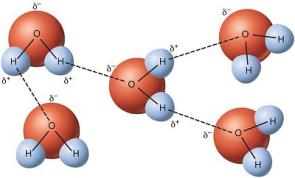 https://manoa.hawaii.edu/exploringourfluidearth/chemical/properties-water/hydrogen-bonds-make-water-sticky
