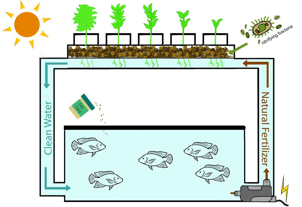 https://www.ecolifeconservation.org/aquaponics/