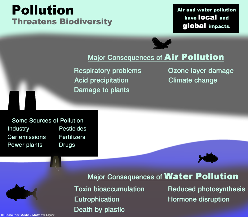 Pollution threatens biodiversity from Leafcutter Media/Matthew Taylor.