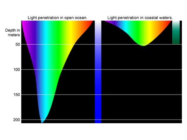 http://oceanexplorer.noaa.gov/explorations/04deepscope/background/deeplight/media/diagram3.html