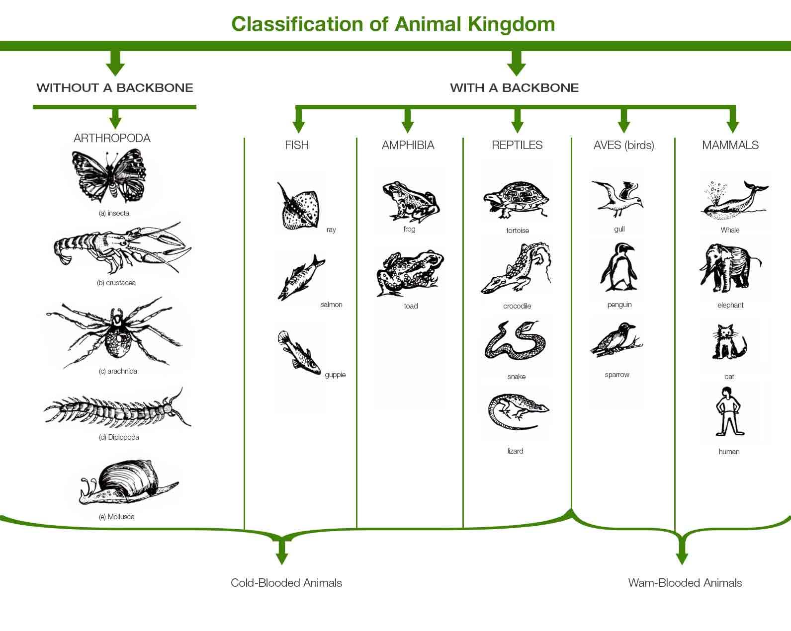 https://byjus.com/biology/classification-of-animal-kingdom/amp/