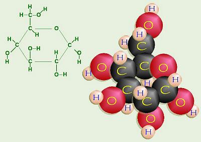 http://biology.clc.uc.edu/courses/bio104/carbohydrates.htm