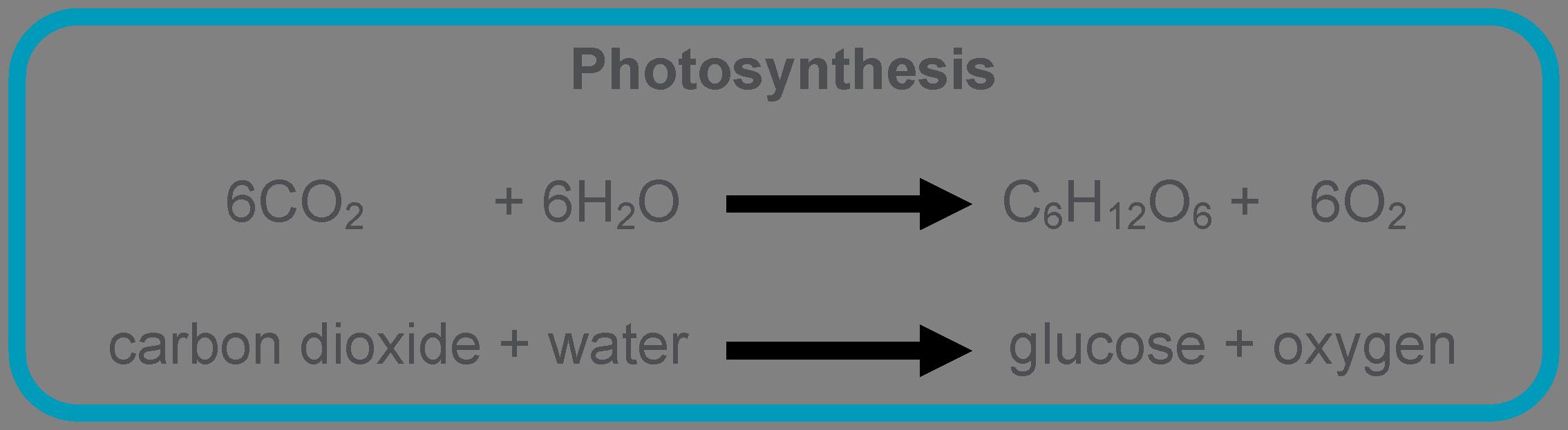 http://biotech4you.com/biotech-notes/plant-biotech/59-photosynthesis