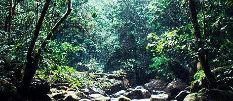 http://wwf.panda.org/about_our_earth/ecoregions/sulawesi_moist_forests.cfm