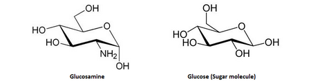 Glucosamine/Glucose